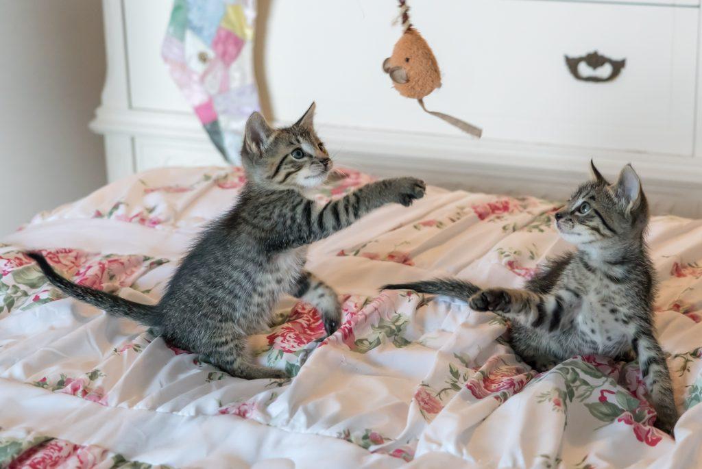 Otros alimentos permitidos para los gatos