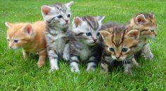 Qué pueden comer los gatos